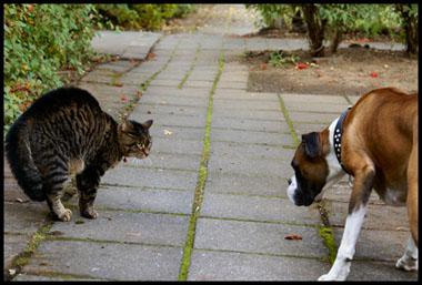 caine pisica cearta