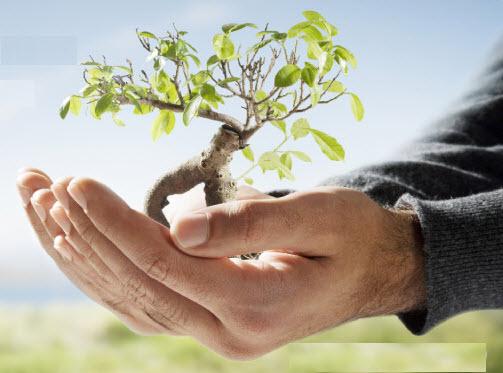 Growing Tree on Hand