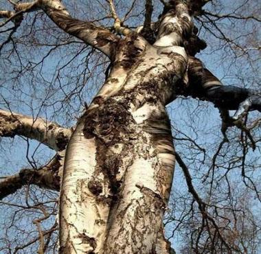 copac superb
